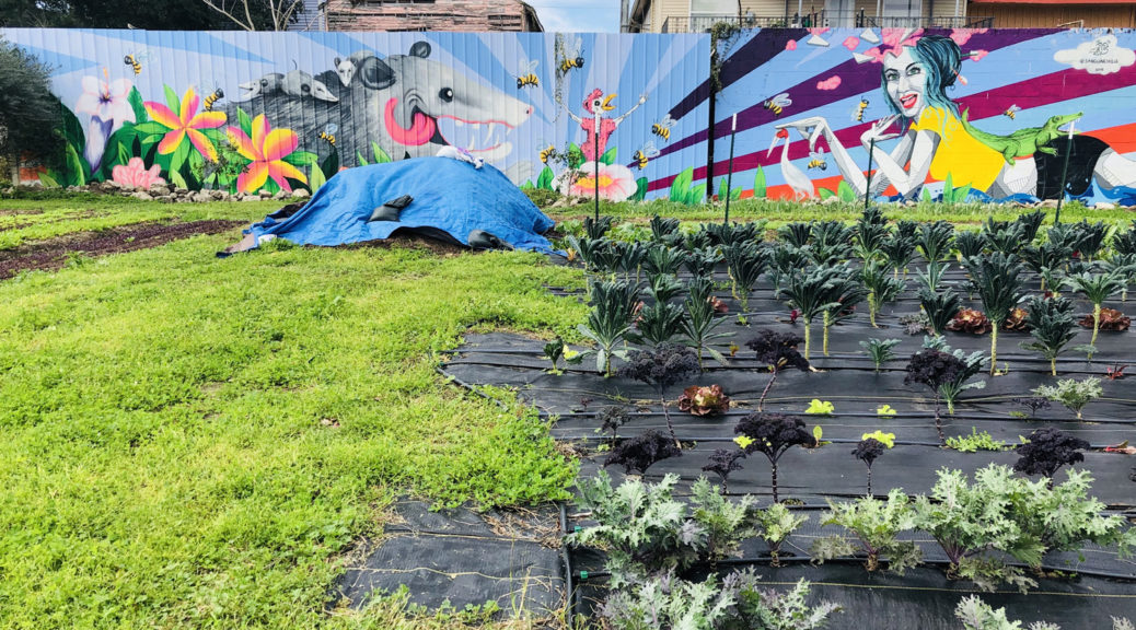 Community garden in New Orleans