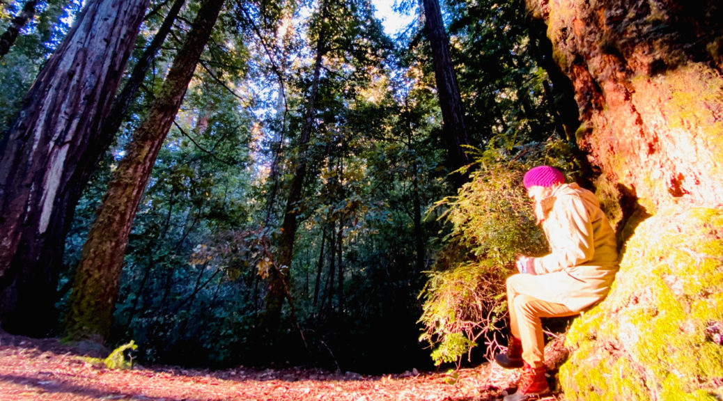 Kirstin sitting among redwoods