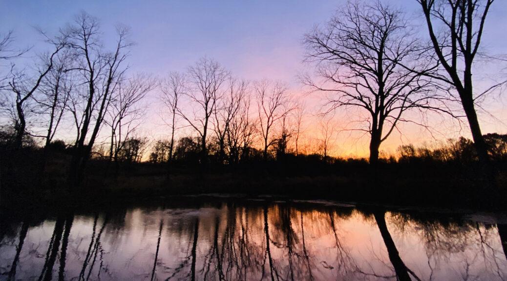 Tree of Life pond